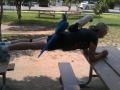 planking-8